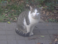 Visitor20121125, #7557