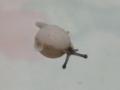 Snail, #6712 (Closeup)