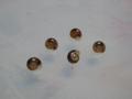 Snail, #6727 (Closeup)