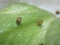 Snail, #6796 (Closeup)