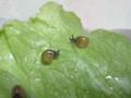 Snail, #6797 (Closeup)