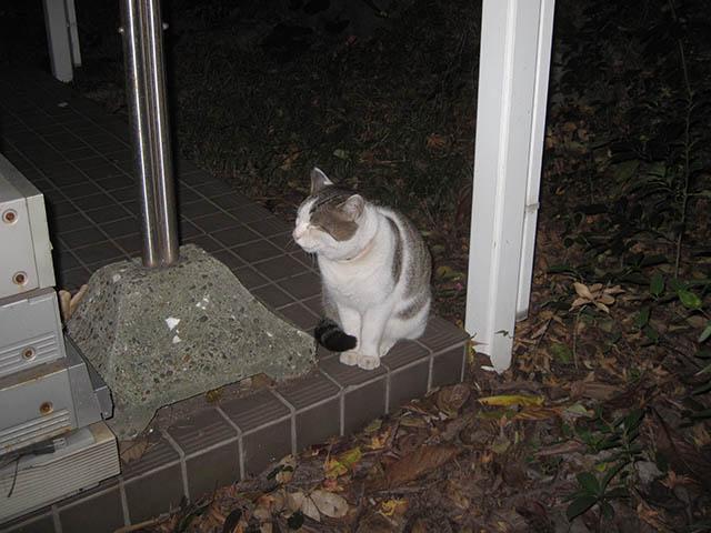 Visitor20121221, #7845