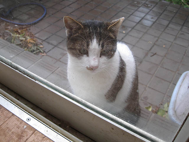 Visitor20121222, #7867