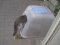 Visitor20121223, #7939