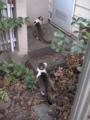 Visitor20121223, #7957