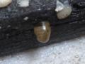 Snail, #7250 (Closeup)