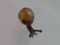 Snail, #7276 (Closeup)