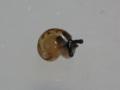 Snail, #7284 (Closeup)