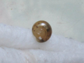 Snail, #7292 (Closeup)