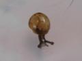 Snail, #7296 (Closeup)
