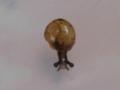 Snail, #7297 (Closeup)