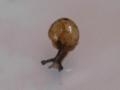 Snail, #7298 (Closeup)