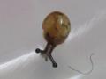 Snail, #7299 (Closeup)