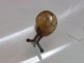 Snail, #7301 (Closeup)