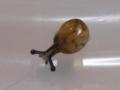 Snail, #7302 (Closeup)