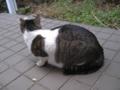 Visitor20121229, #8143