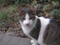 Visitor20121229, #8154