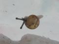 Snail, #7327 (Closeup)