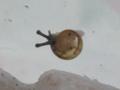 Snail, #7328 (Closeup)