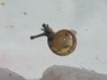 Snail, #7329 (Closeup)