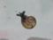 Snail, #7331 (Closeup)