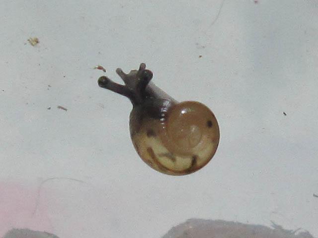 Snail, #7332 (Closeup)