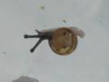 Snail, #7334 (Closeup)