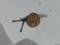Snail, #7335 (Closeup)