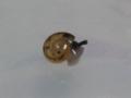 Snail, #7338 (Closeup)