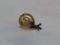 Snail, #7342 (Closeup)