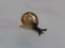 Snail, #7343 (Closeup)