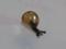 Snail, #7344 (Closeup)