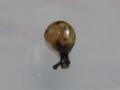 Snail, #7345 (Closeup)