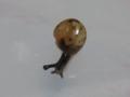 Snail, #7347 (Closeup)