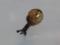 Snail, #7348 (Closeup)