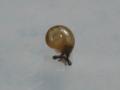 Snail, #7364 (Closeup)
