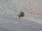 Snail, #7413 (Closeup)