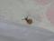 Snail, #7416 (Closeup)