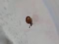 Snail, #7421 (Closeup)
