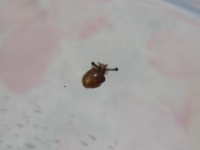 Snail, #7423 (Closeup)