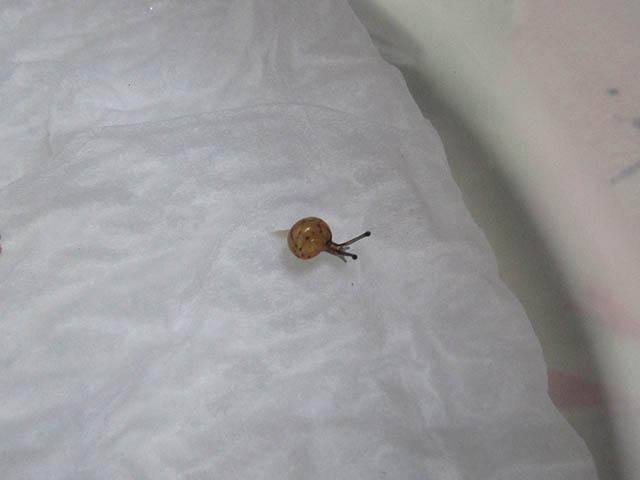 Snail, #7452 (Closeup)