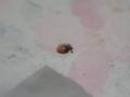 Snail, #7545 (Closeup)