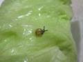Snail, #7562 (Closeup)