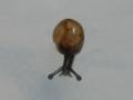 Snail, #7570 (Closeup)