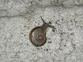 Snail, #8441 (Closeup)