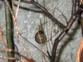 Snail, #8450 (Closeup)