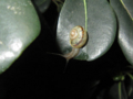 Snail, #8455 (Closeup)