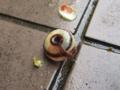 Snail, #8458 (Closeup)