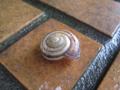 Snail, #8462 (Closeup)