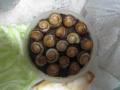 Snail, #8216